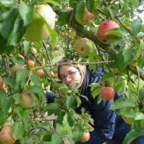 Äpfelplücken